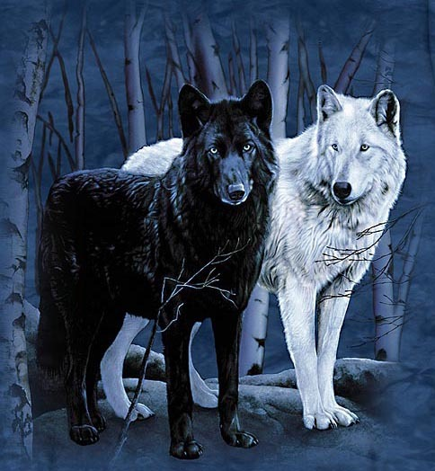 Black And White Wolves Together | www.pixshark.com ...